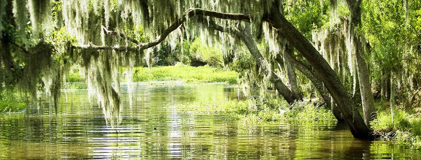 Les meilleurs bayous de la Louisiane | Vacances Fabuleuses