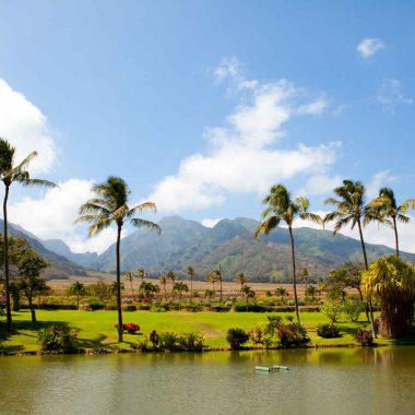 Hawaii en hiver, paradis des baleines